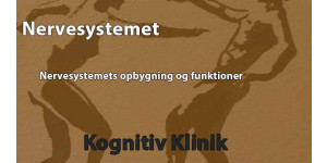 I denne video gennemgår Leif Vedel Sørensen nervesystemets opbygning og funktioner
